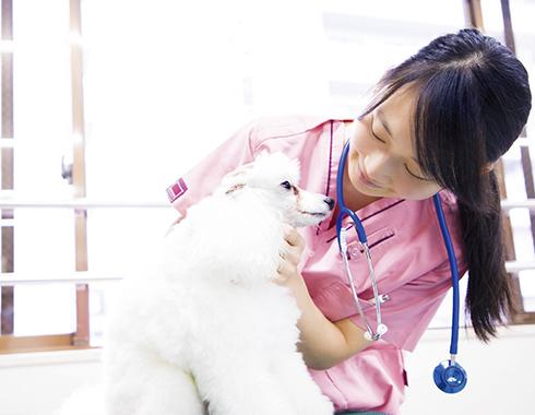 東京愛犬専門学校3