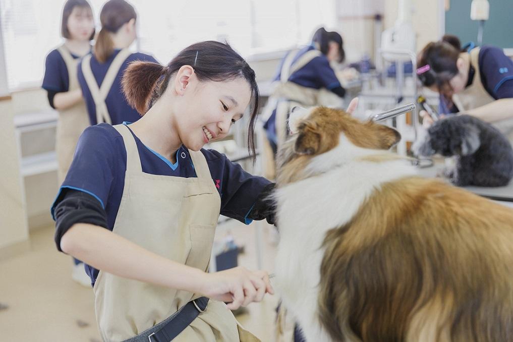 京都動物専門学校2