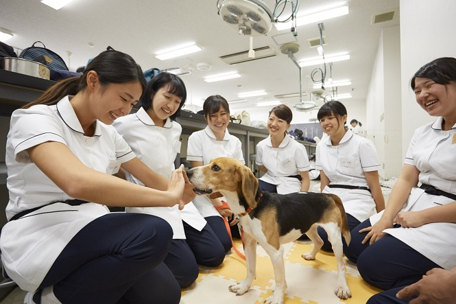 日本獣医生命科学大学3