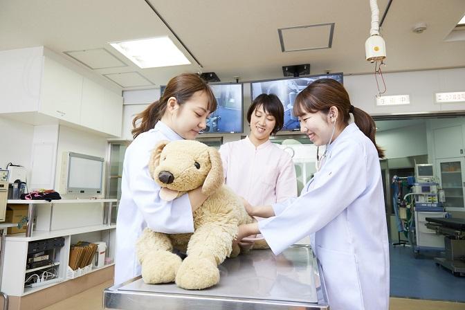 動物看護実習 動物看護の専門知識・技術を学ぶ実践的な授業です。診察中に動物を支える保定、体温測定の方法、投薬の基礎技術や医療器具の使い方などを学びます。