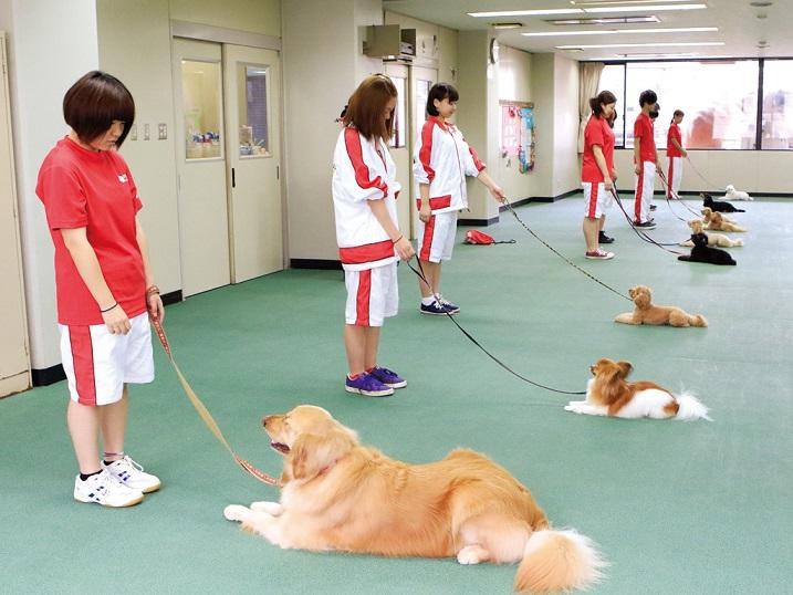 オビディエンス(服従訓練)の様子です。オビディエンスの目的は、犬が人間社会に溶け込めるようにすること。「コイ」「マテ」「スワレ」の動作、散歩の仕方などを教えます。そのために、基礎であるしつけ分野から学びます。
