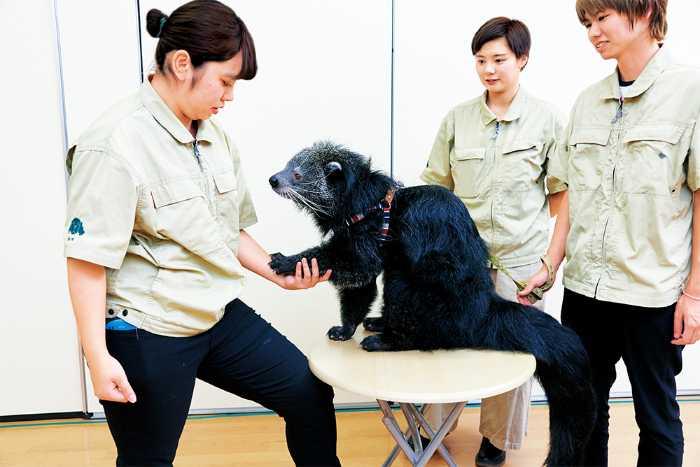 学校には、飼育員を目指す学科もあるので、犬猫以外のエキゾチックアニマルもたくさんいます!飼育学科の学生は魚や鳥、爬虫類、哺乳類まで全ての動物種を扱えるように勉強します!