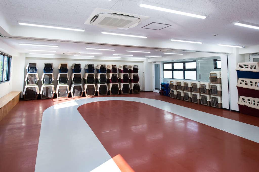 ドッグトレーニングルームです。授業のときには壁一面のケージが全て埋まるほどたくさんのワンちゃんが集まります。