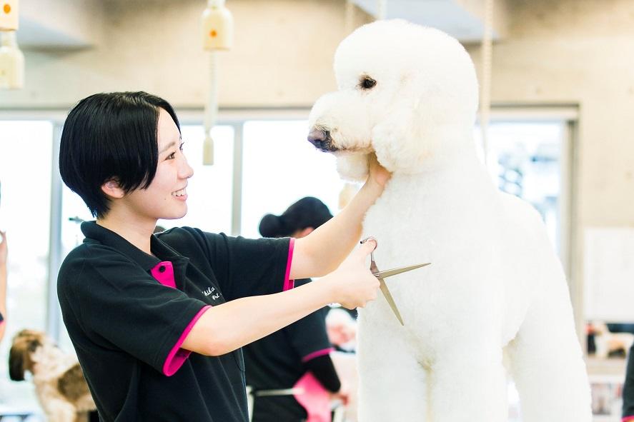 【トリマーコース】たくさんの犬と学び 「犬」と「人」を幸せにするプロのトリマーを目指す!