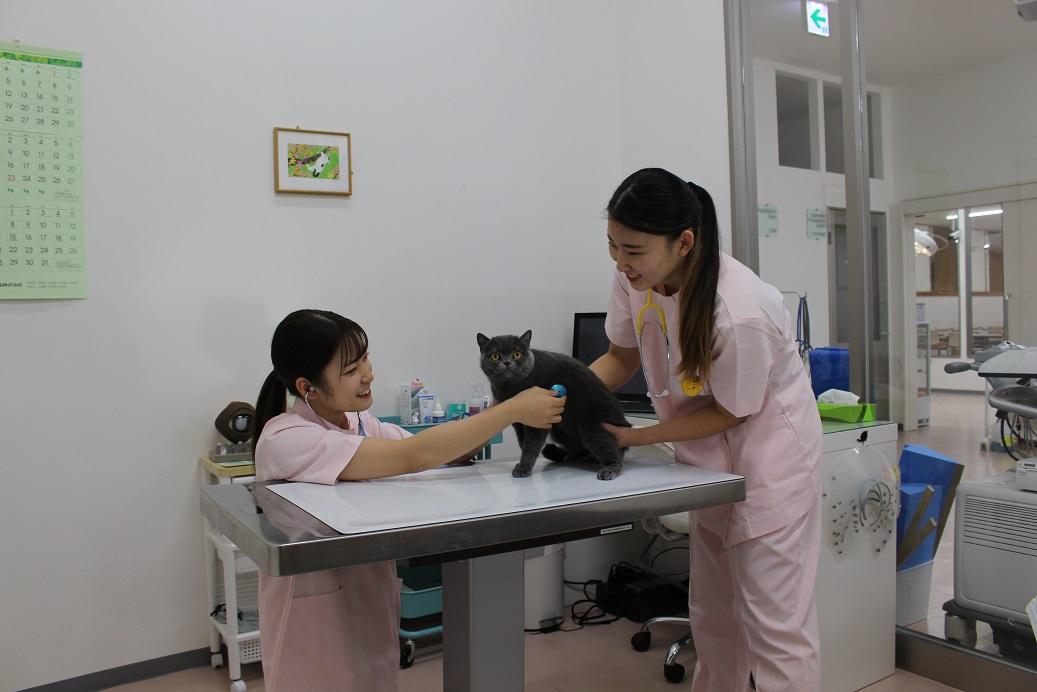 アジア動物専門学校4