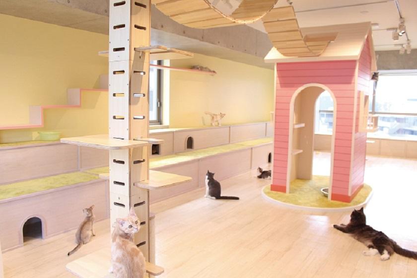 ネコたちが暮らすキャットカフェ。
