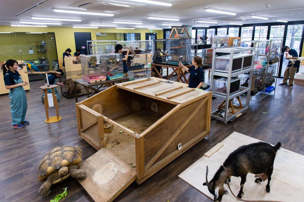 飼育室です。実際の動物園を模倣して現場に近い構造になっています。