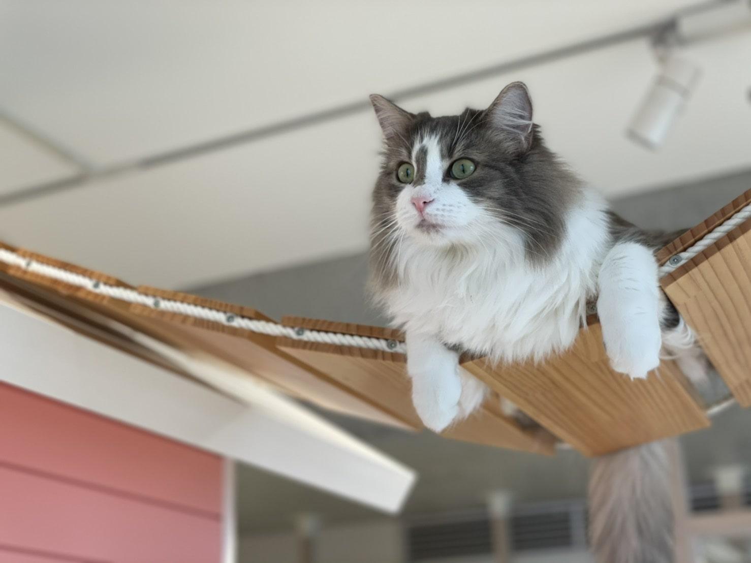 ニャンコの習性を考えたネコ専用の教室でのびのび過ごしています。