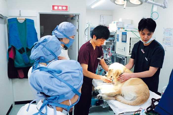 学校外の現場で学ぶ実習も豊富にあります!愛玩動物看護学科では、実際の手術の現場や診察の様子などを間近に学ぶ研修もあるので、実践力や現場経験豊富な獣医師や認定動物看護師からレクチャーを受講できます!