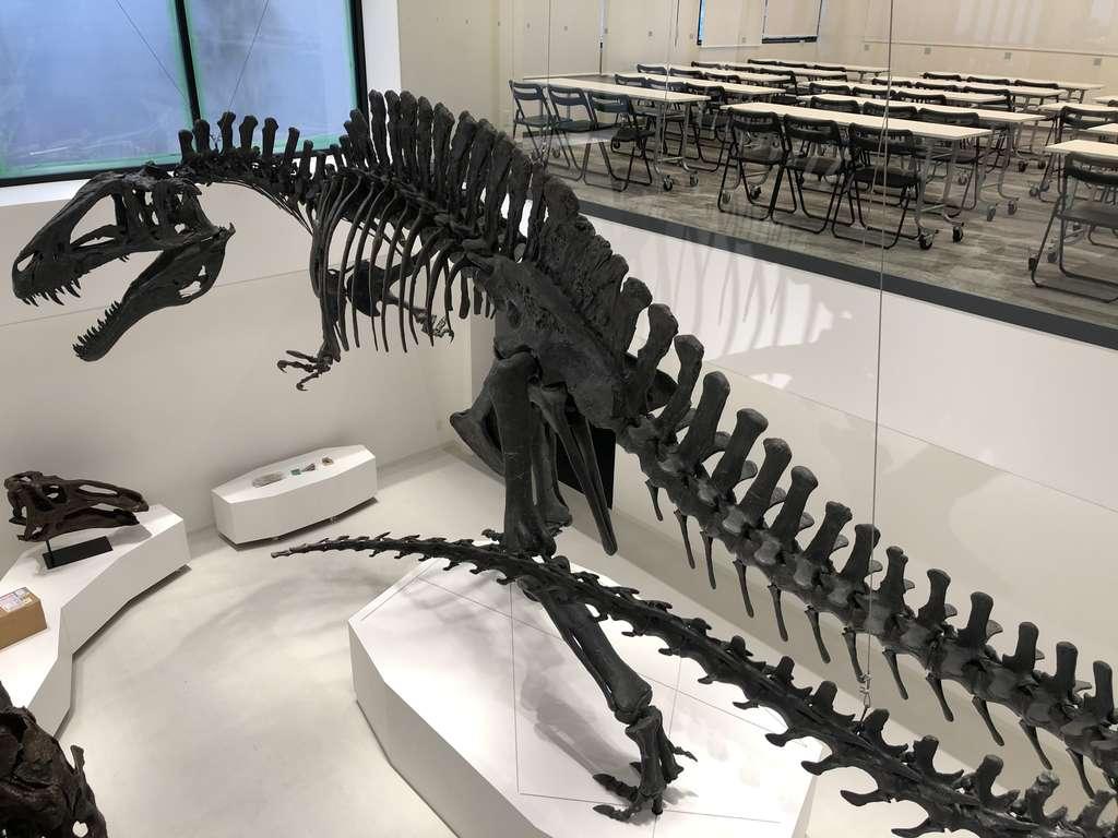 恐竜校舎に展示されている巨大骨格標本です。TCA ECOは日本で唯一恐竜の勉強ができる専門学校でもあります。