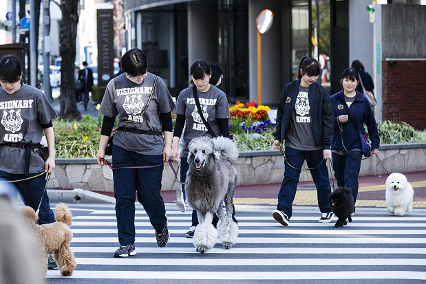 人通りが多い場所でお散歩することで、トレーニングにもなります。
