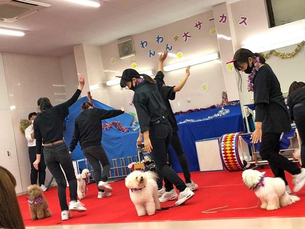 犬と一緒に音楽にあわせて楽しく踊るドッグダンス。しつけの基本ができていると、ダンスが一層たのしいものになります。