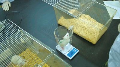 実験動物の正しい管理方法や扱い方を修得するため、マウスやラットを飼育【実験動物飼育施設】