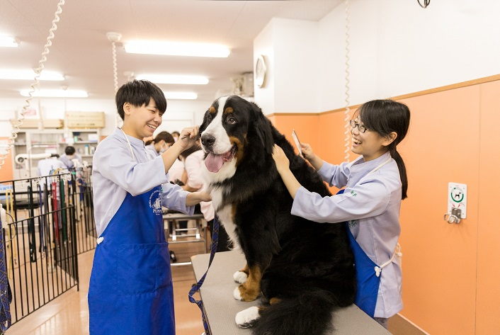 グルーミング実習 動物看護に必要な毛刈りや爪切り、耳掃除、ブラッシング、シャンプーなどの実習です。小型犬から大型犬までさまざまな犬種のお手入れを学びます。