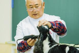 <実習講義> 犬種ごとのカット方法など、一流の講師陣の技を直接学ぶことができます。
