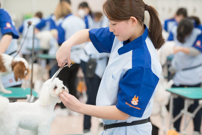 ペットトリマー科ではトリミングだけでなく、動物看護の知識や訓練の技術も身につけることで犬の健康状態や性格を判断し飼い主さんにアドバイスができるトリマーを目指します。