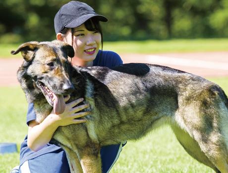 <しつけ・訓練> 犬とふれあい心を通わせながら行動学や心理学を学び、しつけのアドバイスもできるトリマーを育成します。 人と犬が共同で生活するうえで必要な行儀作法(しつけ)の教え方や、犬に仕事や業務の手伝いをしてもらう「訓練」の方法を習得します。しつけ・訓練を受けた犬は飼い主を幸せにするとともに、しつけを行うことは犬を守ることにもつながる大切な授業。まず犬たちと仲良くすることからはじめ、感情表現豊かな犬たちとストレートに向き合いどうすれば心が通じ合うのか、互いに楽しみながら、犬の行動学・心理学を通じて学んで