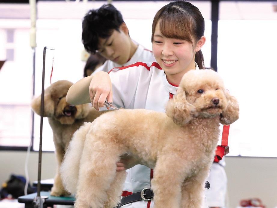 立志舎はよくばりカリキュラム。どのコースでもグルーミング実習、ドッグトレーニング実習、獣医学が学べます。