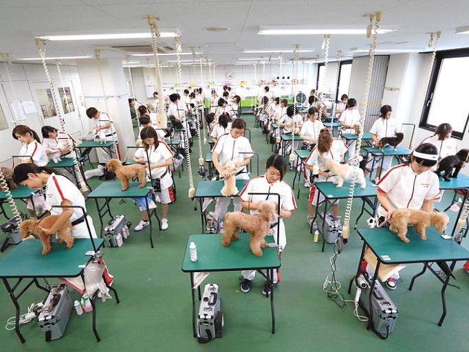 充実した環境と設備で行われるグルーミング実習。清潔で明るい環境で、学生もワンちゃんも落ち着いてグルーミングに取り組めます。