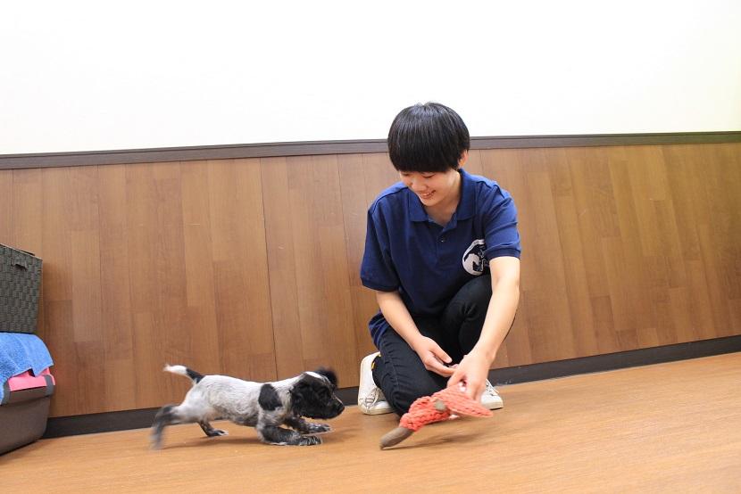 動物総合学科ドッグトレーナーコースです。