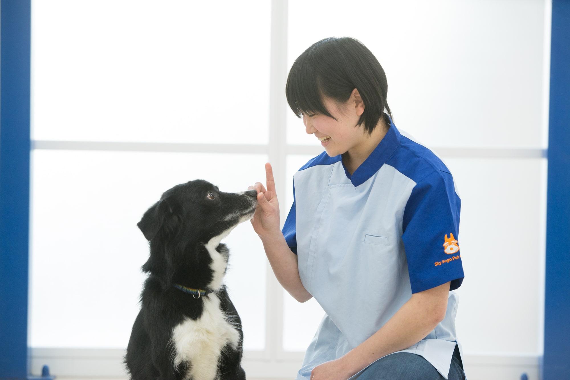 ペット総合科ではトリミング、訓練、動物看護をバランスよく学び、ペット業界のあらゆる分野で活躍できる知識と技術を身につけます。
