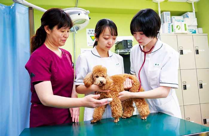 動物看護師は国家資格化(愛玩動物看護師)が決定!この先の将来、ますます仕事の役割が重要となります!学校では、国家資格の取得に向けて全面サポートします!