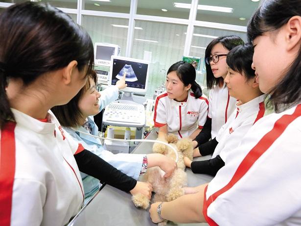 チーム獣医療体制実現のための充実したカリキュラムで飼い主様から信頼される獣医療従事者をめざします。獣医療の現場で求められる確かな知識と技術、その両方を学ぶことができます。