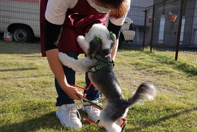 本校自慢のドッグランは、実習に協力してくれるモデル犬の朝夕や実習の合間のリフレッシュに利用します。