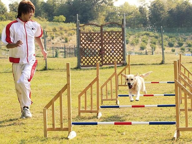 アジリティの様子です。アジリティとは、犬が障害物を「跳ぶ」「くぐる」「登る」競技種目です。恐怖心を与えずに楽しさを伝え、犬と信頼関係を築くことが必要です。