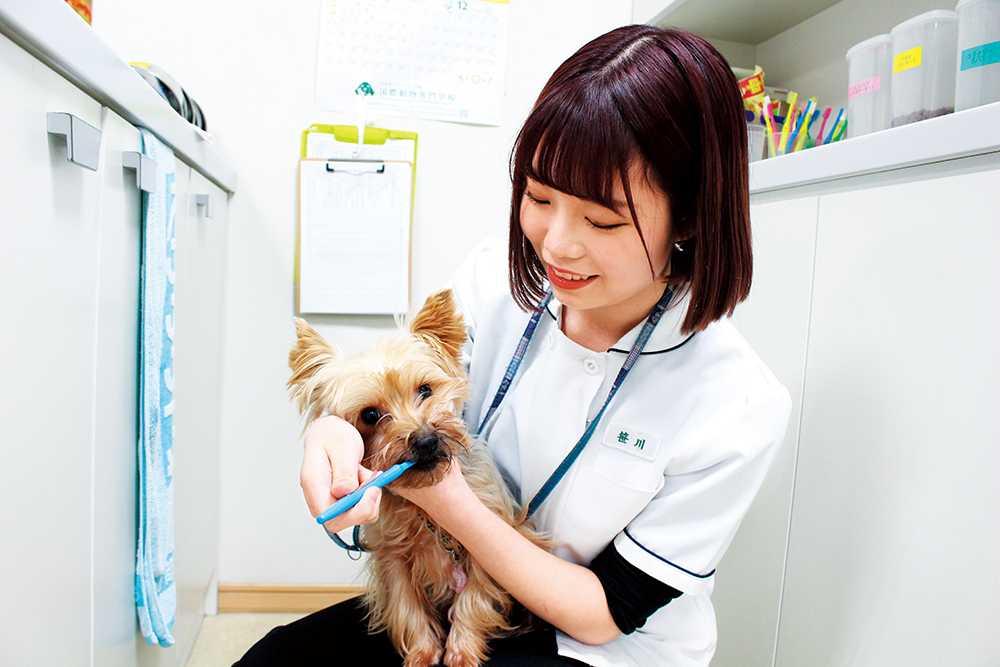 犬猫を飼ったことがない学生も安心!学校動物の飼育健康管理は交代制で学生が担当します!就職するのに必要な動物たちの扱い方も日常的に触りながら学んでいきます!