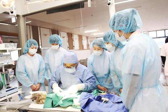 動物理学療法看護学科です。系列実習施設 動物の病院で実習が出来ます。