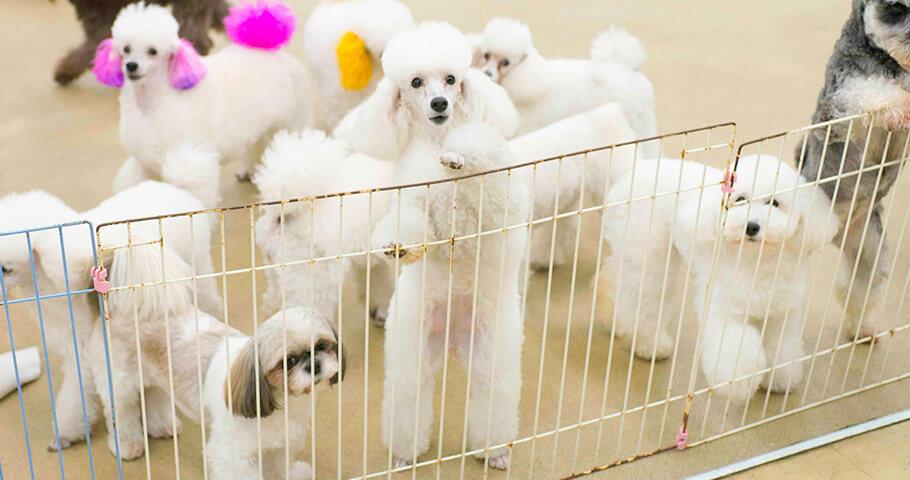 『キャンパスライフをともにする校有動物たち』  学生は担当犬として通常の美容実習や看護実習ではもちろん、定期的な健康チェック、ケアをしながら日常的にふれあうことができます。