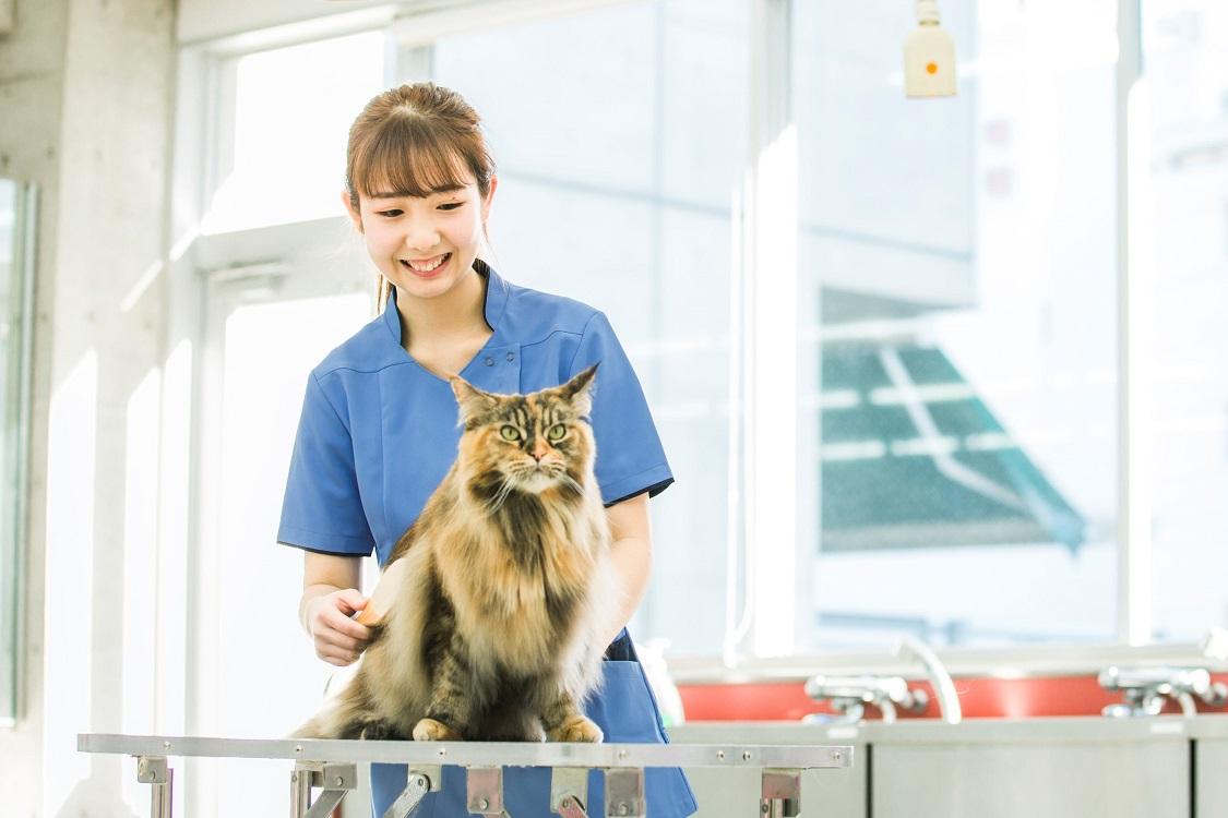 【キャットプロコース】全国でも数少ない専門コースで猫のプロフェッショナルを目指す!