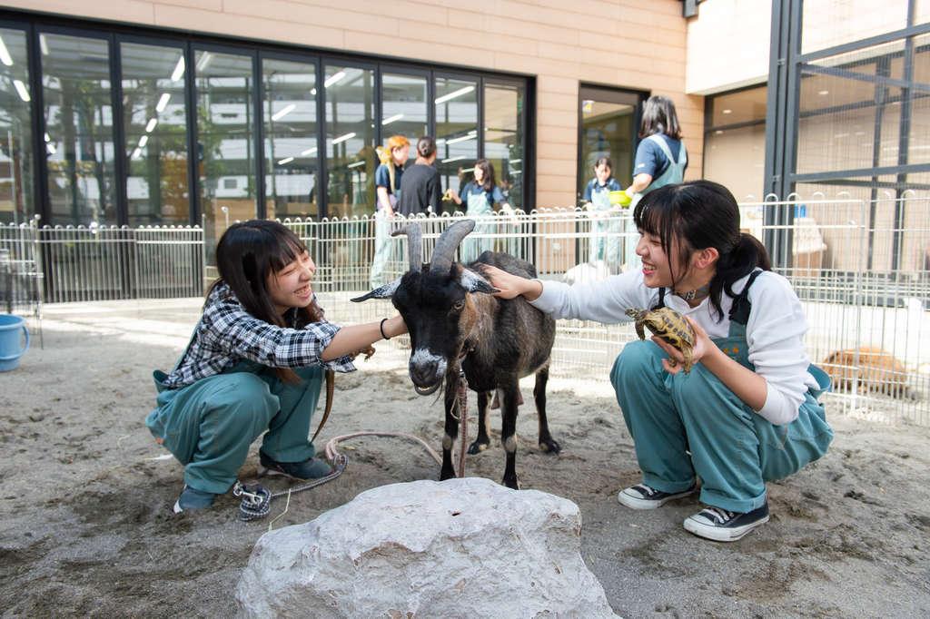 飼育室の動物たちに運動や日光浴をしてもらう場所です。校内に2か所あります。